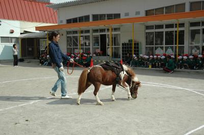 20121015horse01