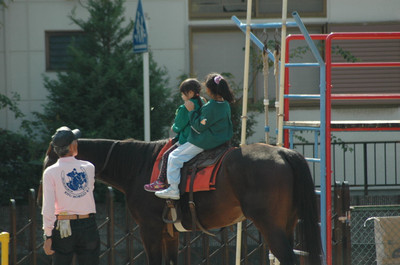 20121015horse02